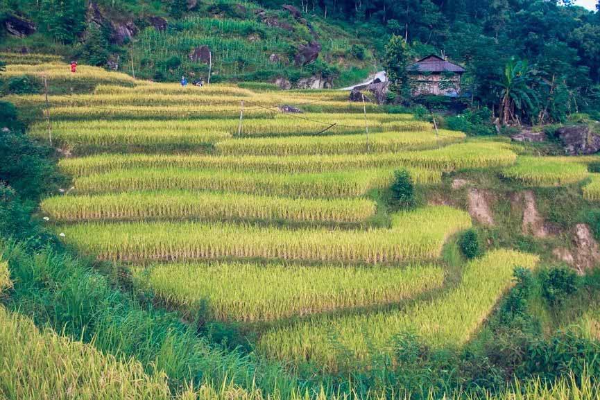 Ngỡ ngàng vẻ đẹp ruộng bậc thang Hoàng Su Phì mùa lúa chín - 10