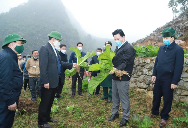 Các đồng chí Thường trực Tỉnh ủy thăm diện tích rau vụ Đông của xã Sính Lủng.